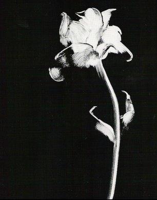 whiterose-large