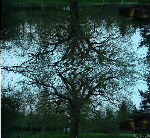 tommo-tree