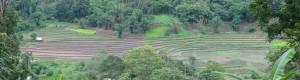 Panorama-ricefield